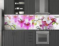 Пластиковый кухонный фартук ПВХ Цветущие орхидеи 01, стеновые панели пластик скинали фотопечать, Цветы, белый, фото 1