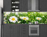 Пластиковый кухонный фартук ПВХ Ромашки в траве, стеновые панели пластик скинали фотопечать, Цветы, зеленый, фото 1