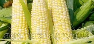 Семена Кукурузы  Мас 32.СР/Duo System®/ (ФАО 320)
