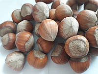 Лесной орех,  фундук лесной, 1 кг