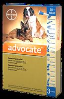 Капли на холку от блох и клещей для собак 25-40 кг, Адвокат (Advocate), Bayer (Байер) 1 пип.*4 мл