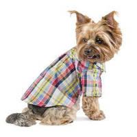 Рубашка для собак Pet Fashion Бадди
