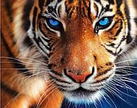 Алмазная вышивка на подрамнике Взгляд тигра-хищника 40 х 50 см (арт. TN137)