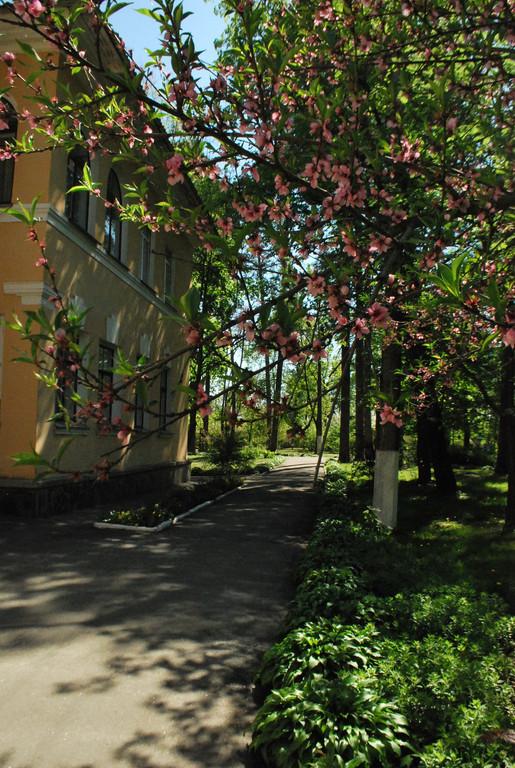 Парковая зона 31