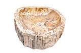Раковины из окаменелого дерева родом из Индонезии. , фото 3