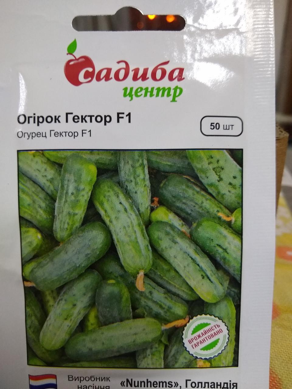 Семена Огурец Гектор F1 сверхранний кустовой гибрид самоопыляемый 50 семян Nunhems  Голландия