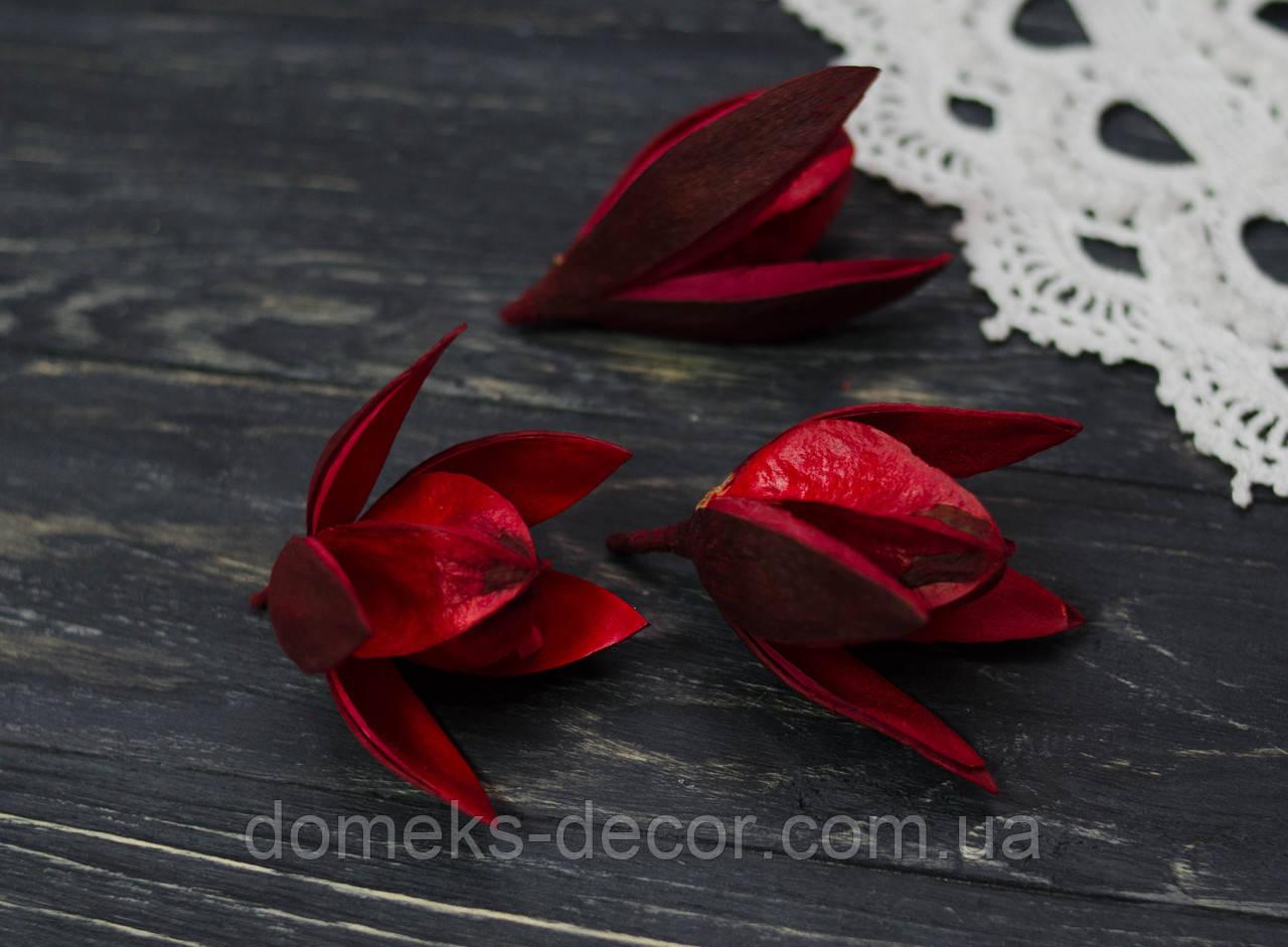 Сухоцвет цветок красный 1 шт, фото 1