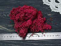 Исландский мох вишнево-малиновый - стабилизирован, фото 1