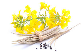 Семена Озимый рапс Синтетик
