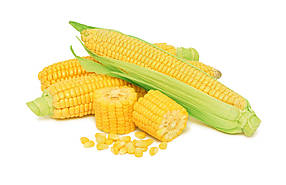 Семена кукурузы Сансвит