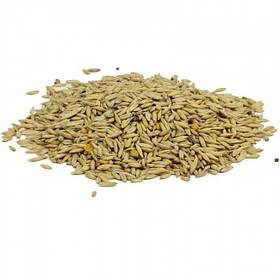 Семена Овес Диетический