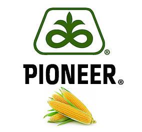 Семена кукурузы П8521