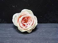 Головка розы Д.Остина мал воздушная айвори-персиково-розовая (темная) с зеленцой