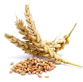 Семена Ячмень яровой Этикет