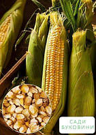 На развес Кукуруза 'Бондюэль' ТМ 'Весна' цена за 40г