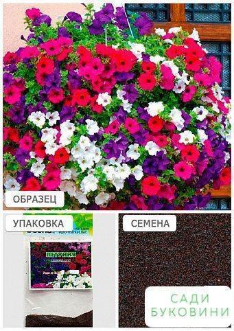 Петуния 'Ампельная' (Зипер) ТМ 'Весна' 1г