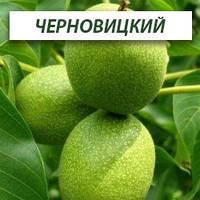 Грецкий орех Черновицкий,  однолетний