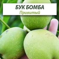 Привитые саженцы грецкого ореха Буковинская Бомба