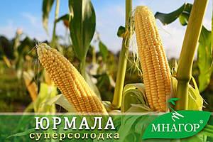 Сахарная кукуруза Юрмала F 1, 1000 семян на 1.5 сотки, 71-73 дней, раннеспелый