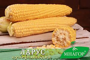 Сахарная кукуруза Ларус (Малибу) F1, Sh2-тип, 1000 семян на 1.5 сотки, 70-72 дней, раннеспелый