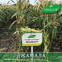 Сахарная кукуруза Джамала F1, Sh2-тип, 1000 семян на 1.5 сотки,  73-75 дней