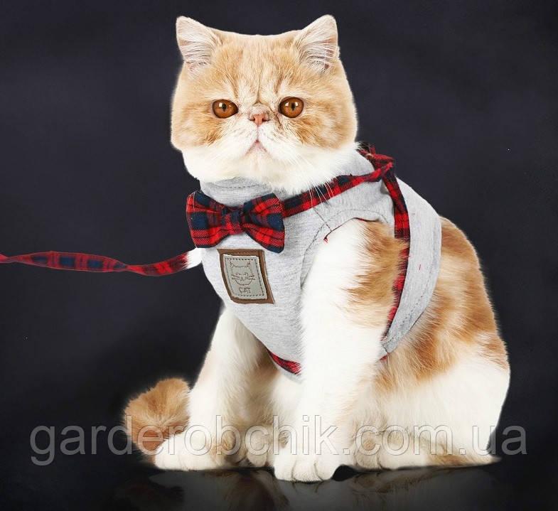 """Мягкая шлейка с поводком  """"CAT - 007"""" для  кота, собаки. Одежда для  кошек, собак"""