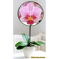 """Растения - Орхидея (подросток) """"TAYLOR"""", 1 шт."""