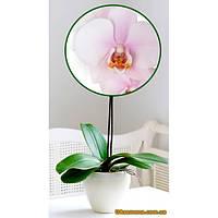 """Растения - Орхидея (подросток) """"MELUSINE"""", 1 шт."""
