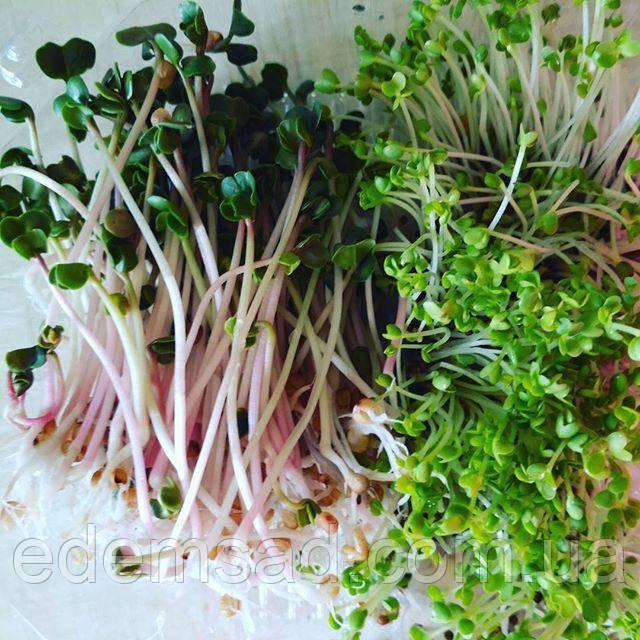 Микрогрин, смесь из ростков и пророщенных семян
