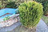 Аккумуляторный кусторез (триммер) Greenworks G40HT61 ( 22332 ) ( Кущоріз акумуляторний Greenworks  ), фото 7
