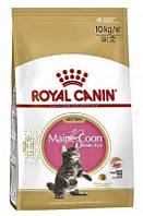 Royal Canin Kitten для котят Мейн Кунов корм Роял Канин Киттен 4 кг