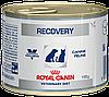 Корм Роял Канин Рекавери Royal Canine Recovery влажный для кошек в период восстановления 195 г