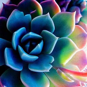 Egrow 100Pcs / Pack Пион Суккулентные Растения Семена Сад Главная страница DIY Растения Бонсай Украшения - 1TopShop, фото 2