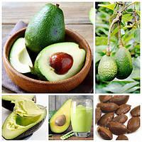 Egrow 10Pcs / Pack Avocado Семена Persea Americana Mill Pear Seed DIY Здоровый фруктовый салат - 1TopShop