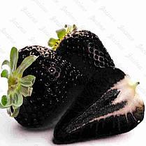 Egrow 200 PCS Black Strawberry Семена Свежее экзотическое вкусное фруктовое горшечное семя Сад Бонсай Растение - 1TopShop, фото 2