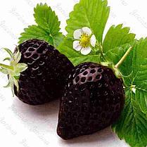 Egrow 200 PCS Black Strawberry Семена Свежее экзотическое вкусное фруктовое горшечное семя Сад Бонсай Растение - 1TopShop, фото 3