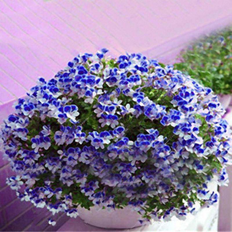 Egrow 100 PCS Geranium Seed Сад Горшечный цветок Семена Многолетний балкон во внутреннем дворе На открытом воздухе Растение - 1TopShop