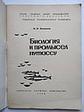 Биология и промысел путассу В.К.Зиланов, фото 2