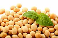 Соя натуральная без ГМО (соевые бобы), 500 г