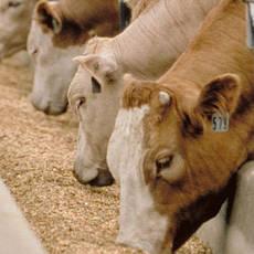 Сельскохозяйственные корма