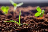 Органические удобрения.Чем полезны.