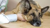 болезни у Вашей собаки,которые Вы можете вовремя распознать.