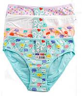 Трусики для девочек DCPOLO 4929,за упаковку из 12 шт, на 8-10лет, 10-12 лет, 12-14 лет хлопок, Польша