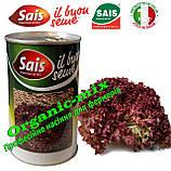 Семена салата Лолло Россо / Lollo Rosso ТМ «Sais» (Италия), банка 500 грамм, фото 2