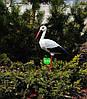 Садовая фигура Семья садовых аистов №9, фото 4
