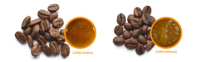 как выбрать кофе, основные отличия робусты и арабики