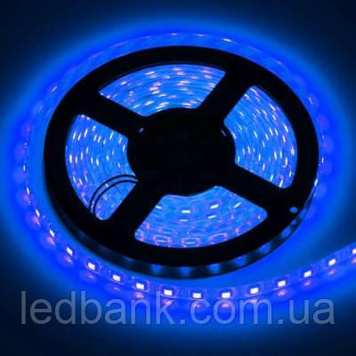 Светодиодная лента SMD 5050 60 LED/m IP20 синяя