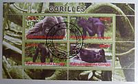 """Конго Блок """"Гориллы"""" 2009 г."""
