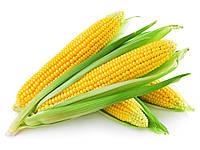 Кукуруза сахарная ТУСОН (ТАЙСОН) F1 Syngenta 100 000 шт