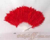 Веер перьевой, красный